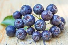 Black choke berry. Black choke berries, a closeup stock photo