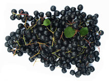 Black chokeberry (aronia). Well known for its many health benefits stock photo