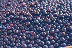 Black Chokeberry Ashberry background, selective focus Royalty Free Stock Photos