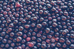 Black Chokeberry Ashberry background, top view Royalty Free Stock Photo