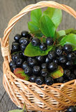 Black chokeberry in the basket Royalty Free Stock Image