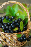 Black chokeberry in the basket Royalty Free Stock Photography