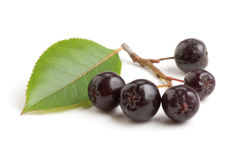 Black chokeberry bunch Royalty Free Stock Image