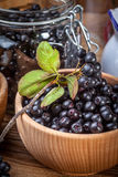 Black chokeberry. Stock Photo