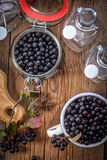 Black chokeberry. Royalty Free Stock Photography