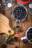 Black chokeberry. Royalty Free Stock Photos