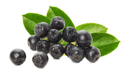 Black chokeberry isolated on the white background Royalty Free Stock Images