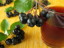 Black chokeberry juice Royalty Free Stock Photo