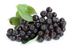 Black chokeberry Royalty Free Stock Photography