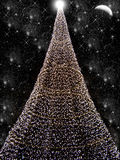 Black Christmas. Tree christmas in snow night on black background Stock Images