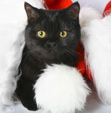 Black Christmas kitten. Royalty Free Stock Photography