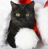 Black Christmas kitten. Royalty Free Stock Photography
