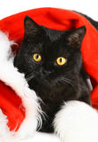 Black Christmas kitten. Royalty Free Stock Images
