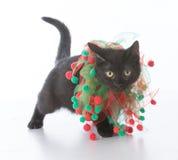 Black christmas kitten Stock Photo