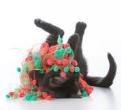 Black christmas kitten Stock Images