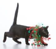 black christmas kitten Royalty Free Stock Image