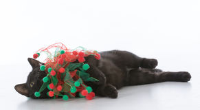 black christmas kitten Royalty Free Stock Photography