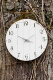 Black clock hung on a tree Royalty Free Stock Photo