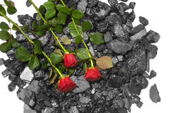 Black coal red roses background Royalty Free Stock Photo
