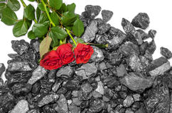 Black coal red roses black industry Stock Photos