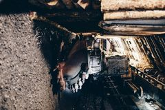 Black coal shearer. In underground coal mine Royalty Free Stock Image