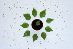 Black coffee and green leaves on white background Royalty Free Stock Images