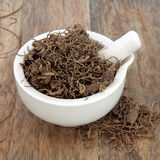 Black Cohosh Root Herb. Used in natural alternative herbal medicine over old wood background. Used to treat menopausal and pre menstrual symptoms in women Royalty Free Stock Photos