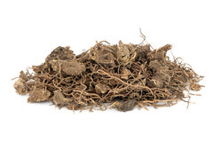 Black Cohosh Root Herb. Used in natural alternative herbal medicine over white background. Used to treat menopausal and pre menstrual symptoms in women. Actaea Stock Photography