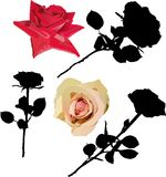 Black and color rose collection. Illustration with different roses isolated on white background Vector Illustration
