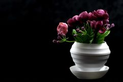 A black colored flowers planted in flower pots on the ground stock photography