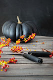 Black colored pumpkin with berries and scissors Royalty Free Stock Image