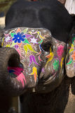 Black and colour painted elephants head Royalty Free Stock Photo