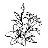 Black contour of lily flowers. Vector illustration. Vector black contour of lily flowers isolated on a white background royalty free illustration