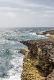 Black Coral Along Rocky Coast Stock Photos