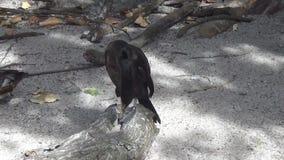 Black cormorant Royalty Free Stock Photo