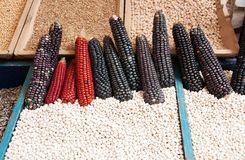 Black corn. Some black corn cob at the market Royalty Free Stock Photo