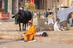 Black cow and Shaiva sadhu, holy man sit on the ghats of the Ganges river in Varanasi, India Stock Images