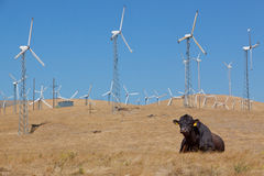 Black cow with wind turbines Royalty Free Stock Photo