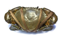 A black crab Stock Images