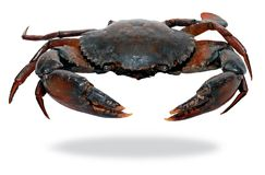 Black crab Stock Image