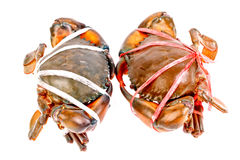 Black crab in isolated on white Royalty Free Stock Photos