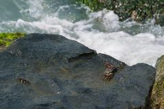 Black crab on wet rock surface stock photos