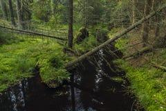 Black creek near Kladska village in Slavkovsky les mountains. In autumn morning Royalty Free Stock Photo