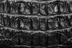 Black Crocodile Leather background texture Stock Photography