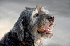 Black crossbreed  dog Stock Photo