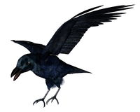 Black crow - 3D render Royalty Free Stock Images