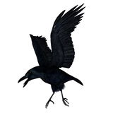 Black crow flying - 3D render Royalty Free Stock Photo