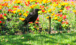 Black crow in the garden Stock Images