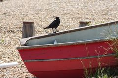 Crow boat, Eastbourne, East Sussex, UK royalty free stock images