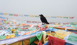 Black Crow Over Flags Stock Images